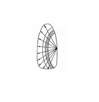 Схема Ракушка иголкой на ногте